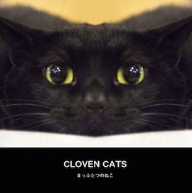 CLOCEN CATS